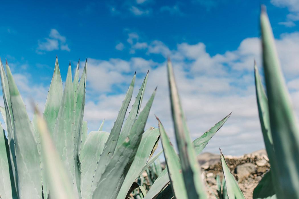 087-imgegenteil_BockAufReisen_Fuerteventura