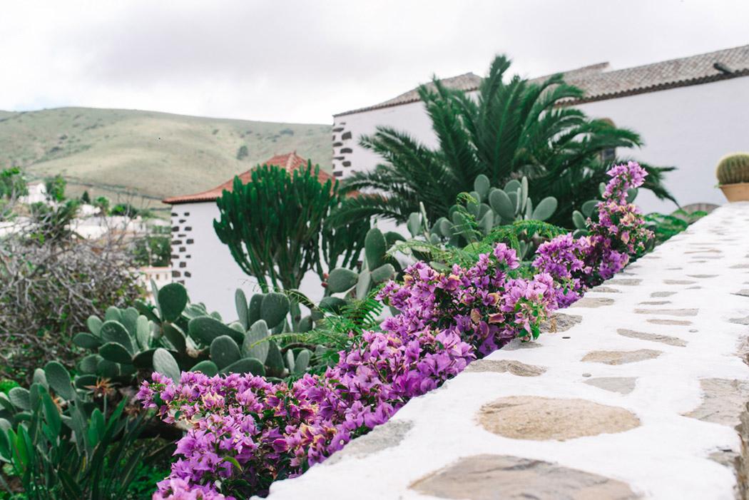 103-imgegenteil_BockAufReisen_Fuerteventura
