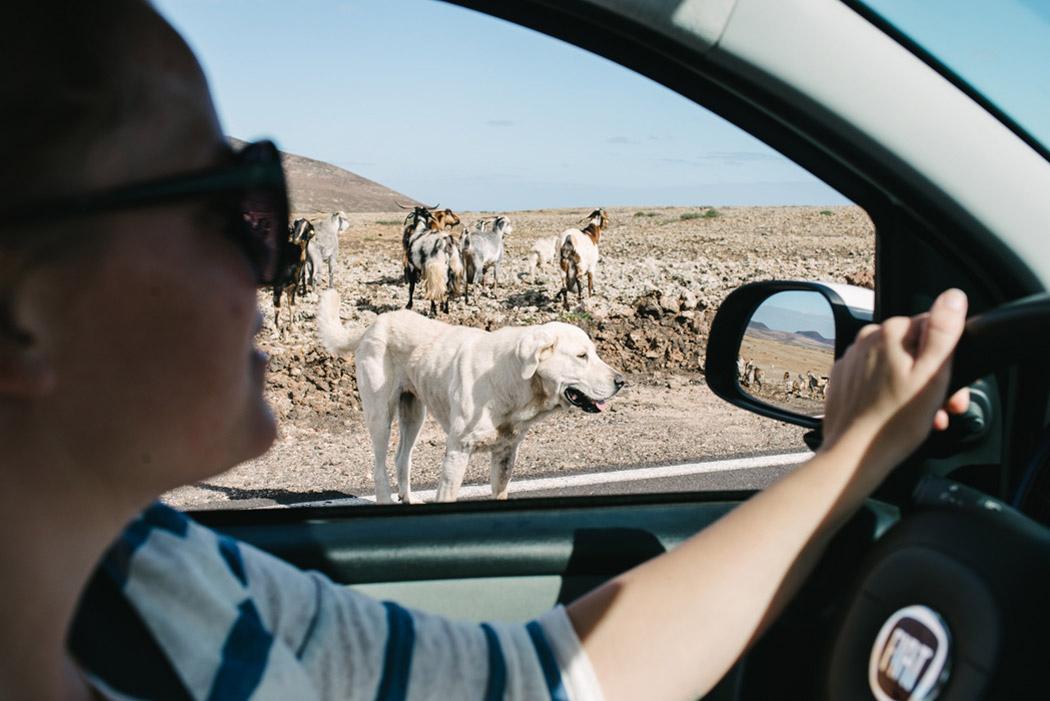 125-imgegenteil_BockAufReisen_Fuerteventura